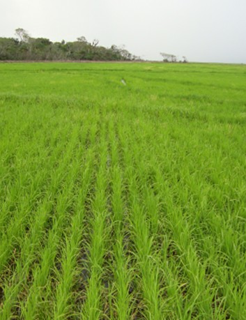 Sembradora grano fino JM 5023, 23 lineas